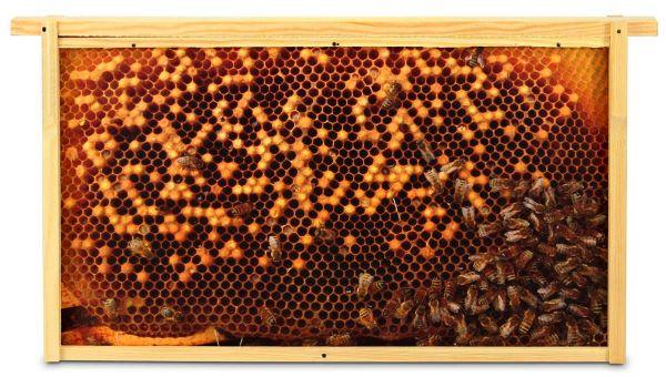 Virtuelles Bienenvolk