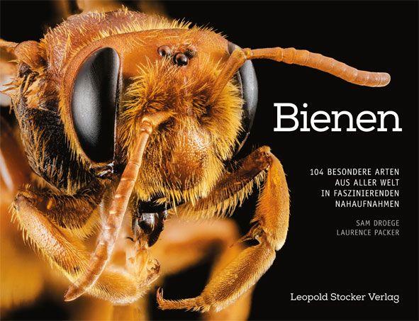 Bienen 104 Arten